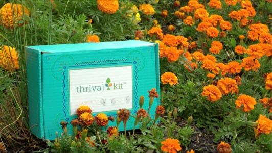 Thrival Kits